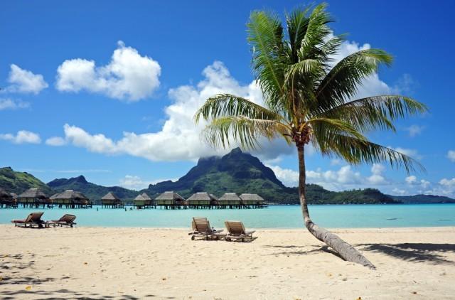 beach scene with palm tree